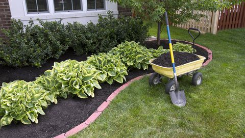 Mulching and its advantages